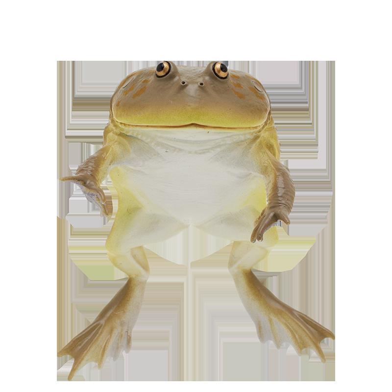 タピオカ ガエル マルメ