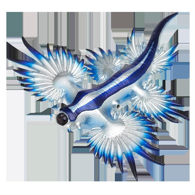 ブルー ドラゴン ウミウシ
